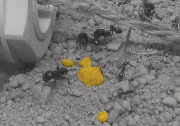 Ameisen-werkstatt