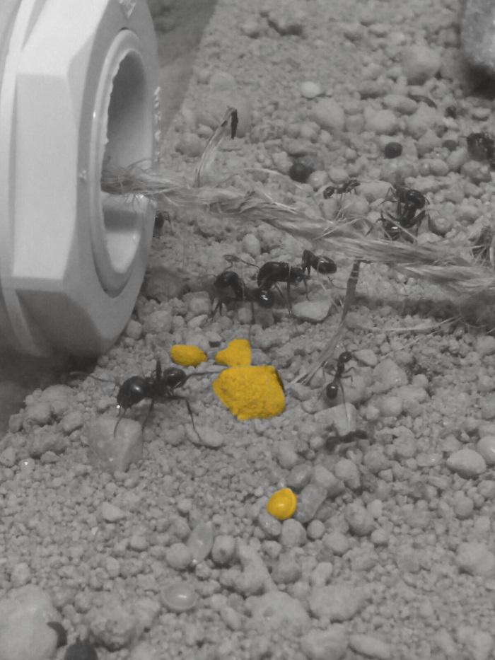 Ameisenwerkstatt_1_eingefärbt_2017-07-09_v1-0_mam