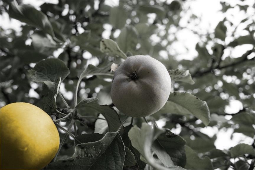 Apfelwerkstatt_1_eingefärbt_2017-07-10_v1-0_mam