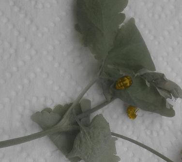 Insektenwerkstatt_1_eingefärbt_2017-07-16_v1-0_mam