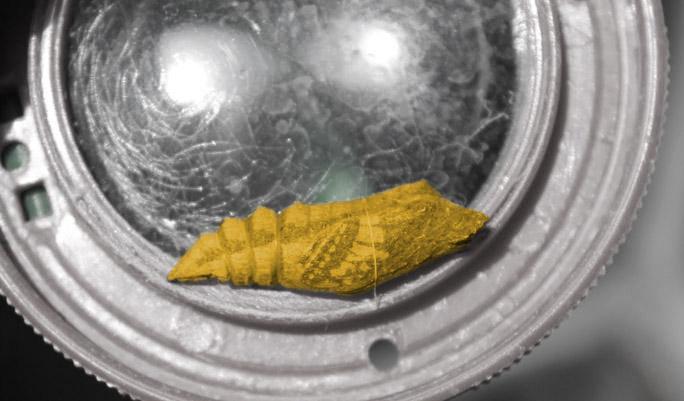 Insektenwerkstatt
