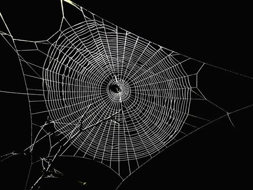 Spinnenwerkstatt_01_2019-01-24_v1-0_ex