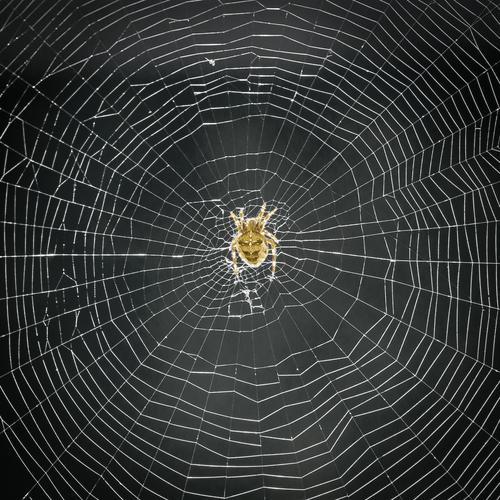 Spinnen-werkstatt